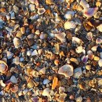 Ракушечки на песке. :: Ольга Анх