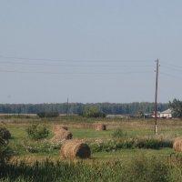 Сельский вид :: Надежда
