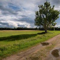 Дерево. :: Dmitry D