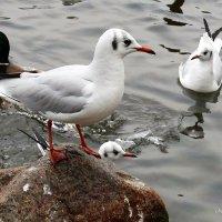 Чайка и компания :: Nina Yudicheva