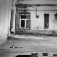 Хозяин двора :: Анна Янн