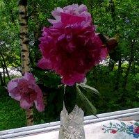 Цветок в подарок :: Андрей