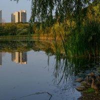 Полная гармония (окраина Торонто, Канада) :: Юрий Поляков