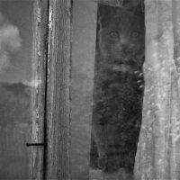 Кошка в окошке. :: Лариса Красноперова