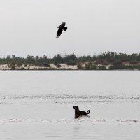 Отчего собаки не летают так , как птицы ? :: Dr. Olver