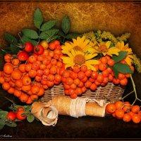 В оранжевых тонах :: °•●Елена●•° Аникина♀