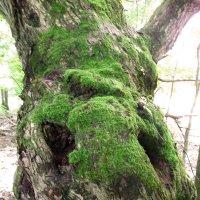 Природа любит пошутить :: Тамара Лисицына
