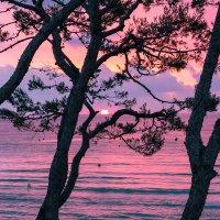 Краски раннего утра. :: Эльвира Лопатина