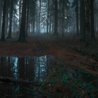 Утренний лес :: Artem Mihko