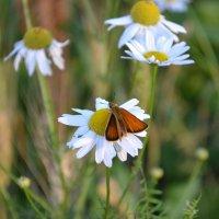 Бабочка :: Валерия