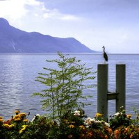 Монтрё - Женевское озеро. Швейцария. :: Tatiana Poliakova