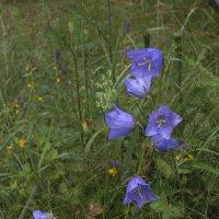 Лесной цветок :: Сергей Цветков