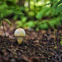 про грибы :: Dmitry i Mary S