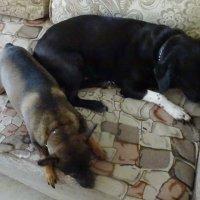 ...улеглись они поспать :: татьяна