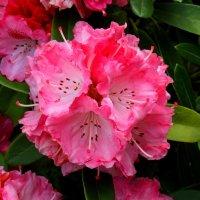 Какой-то цветок. :: Ольга Анх