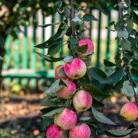 Через минуту Ева одно из этих плодов отдаст своей второй половине! :: Валерий Рыкунов