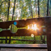 Прогулка в лесопарке 2 :: Сергей Филатов