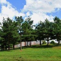 Зимой и летом одним цветом!.Сосновая горка в нашем парке. :: Татьяна Помогалова