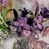 Орхидея-контражур :: Виталий Авакян