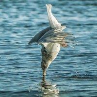 .. 10 балов в прыжке за рыбьим хвостом... :: Лилия .