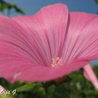 Цветок :: OLLES