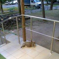 кошка :: Андрей