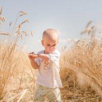 Пшеница :: Екатерина Александровна
