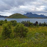 Northern Nature in July :: Roman Ilnytskyi