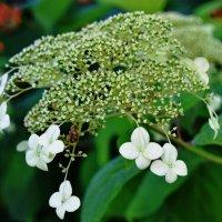 Отлетают цветочки, как листочки календаря. :: Татьяна Помогалова