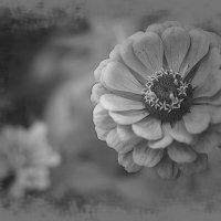Цветы.... :: Екатерина Рябинина