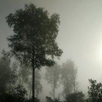 В тумане :: Tanja Gerster