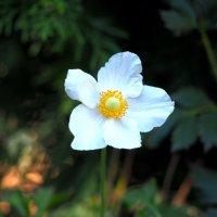 Летний цветок :: KALIOT