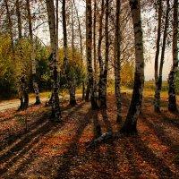Осенний мотив :: Валерий Толмачев
