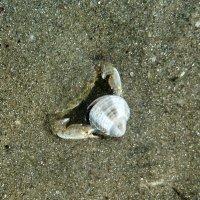 Вскрытие моллюска. :: Сергей