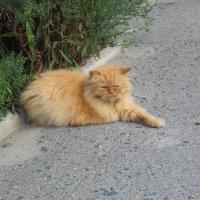 Уличный мыслитель (не бродяга) :: Галина