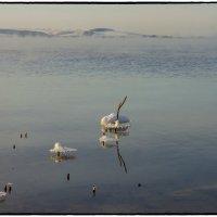 Февральский вечер на Нововоронежском водохранилище  2014 :: Юрий Клишин