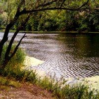 На реке :: Людмила