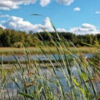 Трава на озере :: Дмитрий Конев