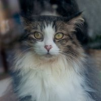Котик за окном :: delete