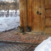 Коты :: Анна Воробьева
