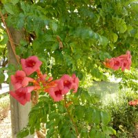 цветы :: Люша