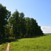 Вдоль леса :: Ольга