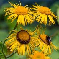 Цветы :: mishel astoria