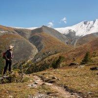 В горах Алтая. :: Ирина Токарева