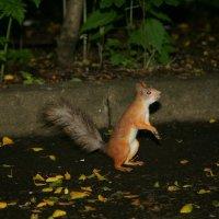Ты мне орехи принес? :: Олег Шабашев