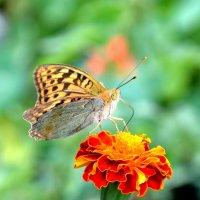 Танец на цветке :: Ольга Голубева