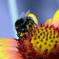 Bumblebee :: Олег Шендерюк