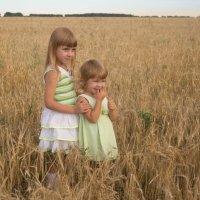 В пшеничном поле :: Алиса *****