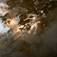 самоварный дым в лучах заходящего осеннего солнца :: Александр Беляков