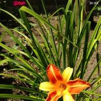 Эстафетацвета. Оранжевый втрник - Цветы :: Наталья (ShadeNataly) Мельник